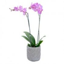 Purple Beauty Orchid Arrangement