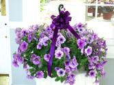 Purple Hanging Petunia Basket