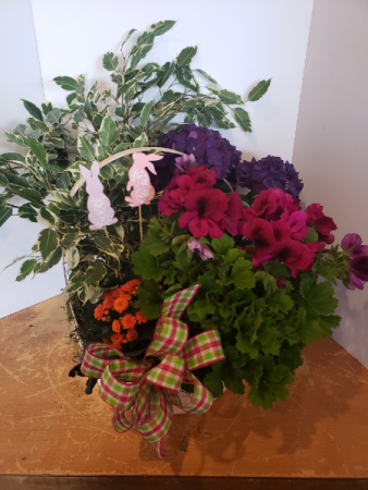 Purple hydrangea Easter basket Plants