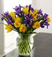 Purple Iris & Yellow Daffodils Fresh Flowers