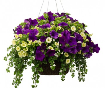 Image result for hanging baskets