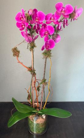 PURPLE ORCCHID ELEGANT MIXTURE OF FLOWERS in Houston, TX   Bella Flori