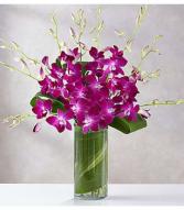 Purple Orchid Embrace