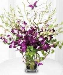 PURPLE ORCHID MAJESTY Flower Arrangement
