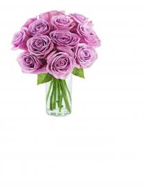 Purple Passion 12 Purple Roses