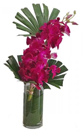 Purple Passion Cut flowers