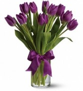 Purple Passionate Tulips