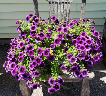Purple Petunia Hanging Basket