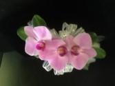 Purple Phalaenopsis Orchid Wrist Corsage $50      Boutonniere $10