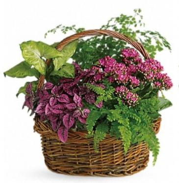 Purple plant basket Plant basket