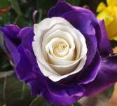 PURPLE WITH WHITE INSIDE ROSE 1 DOZEN