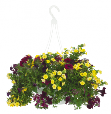 Assorted Summer  Mixed Annual Basket