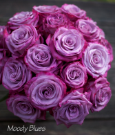 Purplelushes!! Long Stem Premium Purple 1 doz, 18 roses or 24 roses! Beautifully designed in a vase for your sweet heart!!