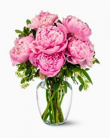 ~TINY PLEASURES~  Gorgeous Peonies !! Sarah Bernhardt Peonies