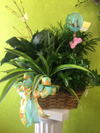 Quad basket of plants