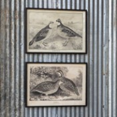 Quail Framed Prints Gifts