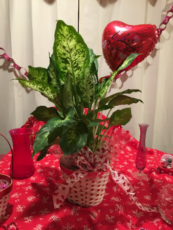 queen of hearts plant ^in green plant an basket w/mylar