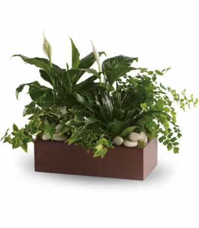 Quiet Expressions All-around Planter