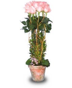 ROSE GARDEN TOPIARY Pale Peach or Pink Roses  in Bayside, NY | BAYSIDE FLORALS & PLANTS