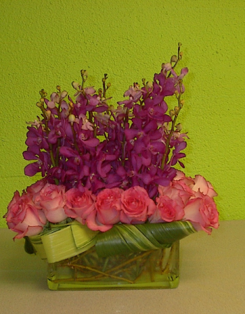 Radiant orchids love Pink roses Rose
