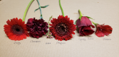 Radiant RED Corsage Colour Board
