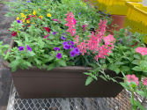 Railing Planter with Blooming Annuals Blooming Plant