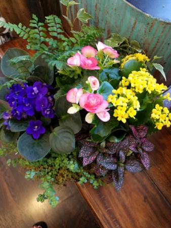 Rain Garden Blooming Planter