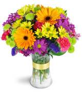Rainbow Radiance  Vase arrangement