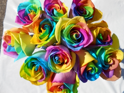 Rainbow roses in allen park mi blossoms florist for How much are rainbow roses