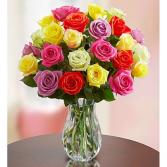 Rainbow Roses
