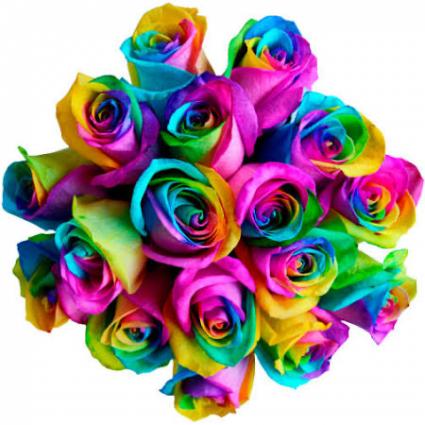Rainbow ❤️  Roses