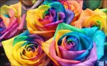 Rainbow Roses Any Quantity