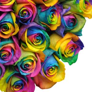 Rainbow Roses Available in Half Dozen, Dozen & Two Dozen in Lake City, FL | LAKE CITY FLORIST