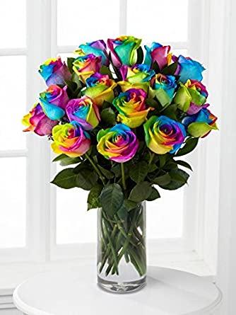 rainbow roses fresh