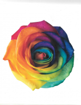 Rainbow Roses 1 dozen Rainbow Roses