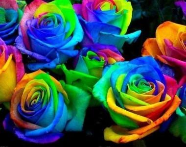 Rainbow Roses Vase Arrangement