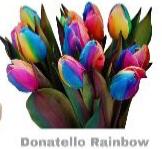 Rainbow Tulips Vase