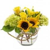 Rays of Sunshine Fresh Flower Arrangement