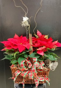 Poinsettia Double Basket Christmas Poinsettias ~ The perfect gift for anyone the Holiday Season. Dreesed up Super Fancy! in Magnolia, TX | ANTIQUE ROSE FLORIST