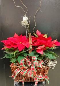 Poinsettia Basket- Dressed up fabulously Christmas Poinsettias ~