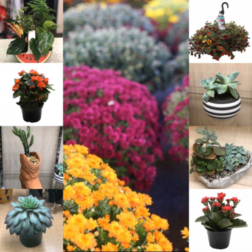 """Plant Subscription """"Ready Set Grow!"""" 2- Potted plants delivered each month."""