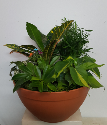 Real plants in pot with little butterflies planter