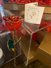 Real Rose Trimmed in 24K Gold