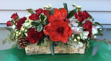Red Amaryllis Holiday Box