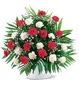 RED AND WHITE CARNATIONS ARRANGED