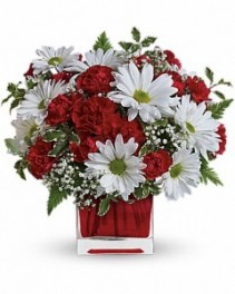 Red And White Delight ---