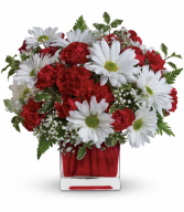 Red and White Delight all occasion
