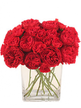 Red Carpet Carnation Bouquet  Mixed Carnations & mini carnations