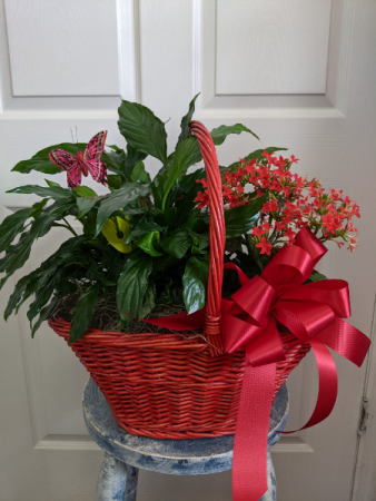 Red Combo Plant Basket