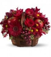 Red Delicious HFWEB453